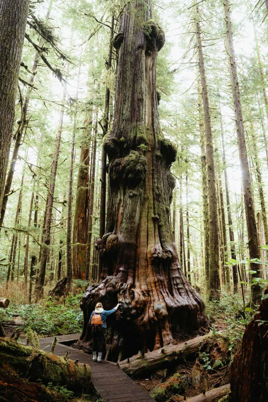 Emily Mandagie standing at Avatar Grove, Vancouver Island - TheMandagies.com