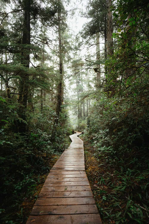 Rainforest boardwalk in Tofino, BC - TheMandagies.com