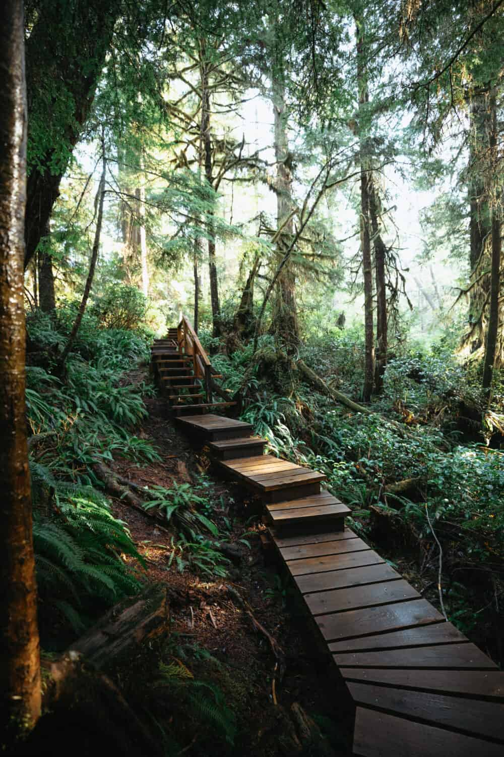 Rainforest Walk Trail in Pacific Rim National Park Trail - TheMandagies.com