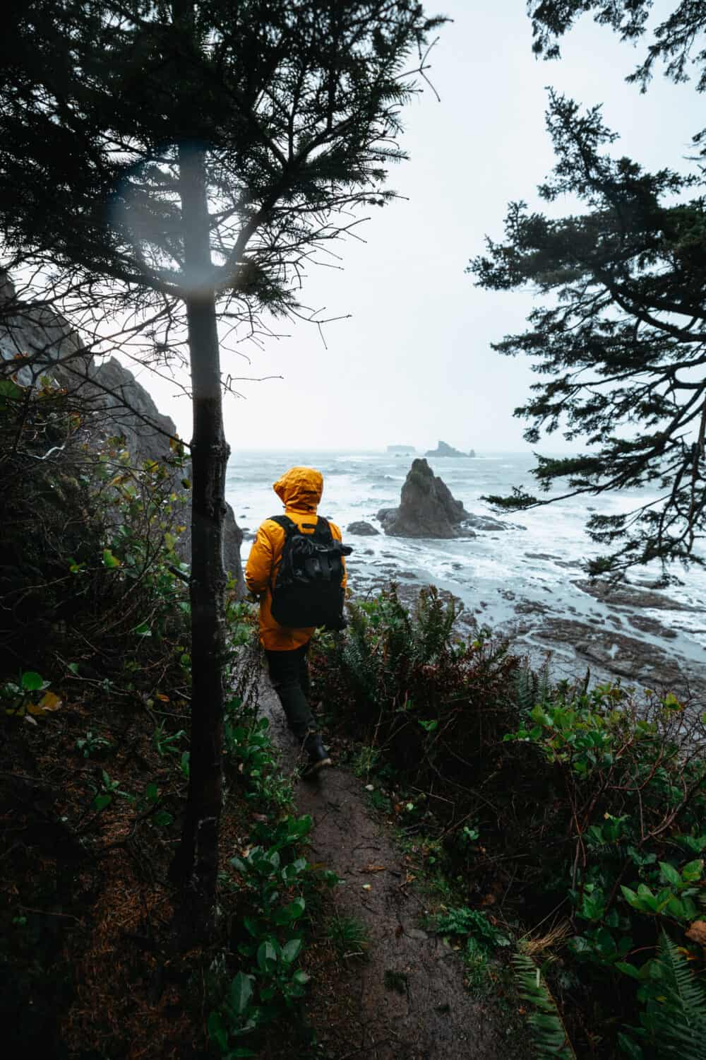 30 Best Things To Do In Olympic National Park Itinerary Examples Best Hikes And Maps The Mandagies