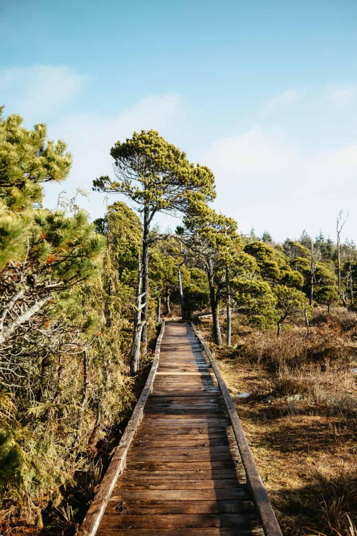 Shorepine Bog Trail - Pacific Rim National Park Preserve - TheMandagies.com