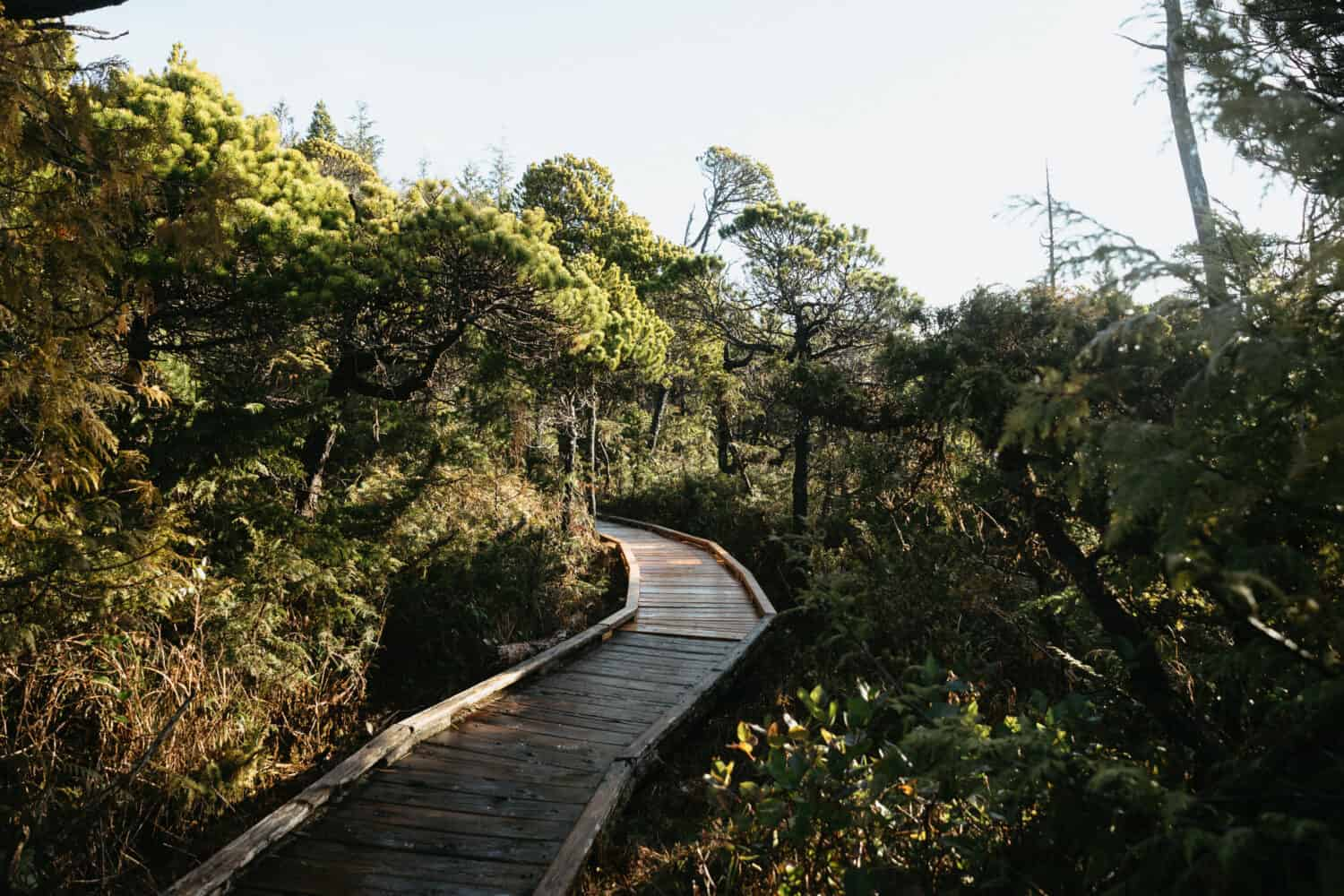 Shorepine Bog Boardwalk - Pacific Rim National Park Preserve - TheMandagies.com