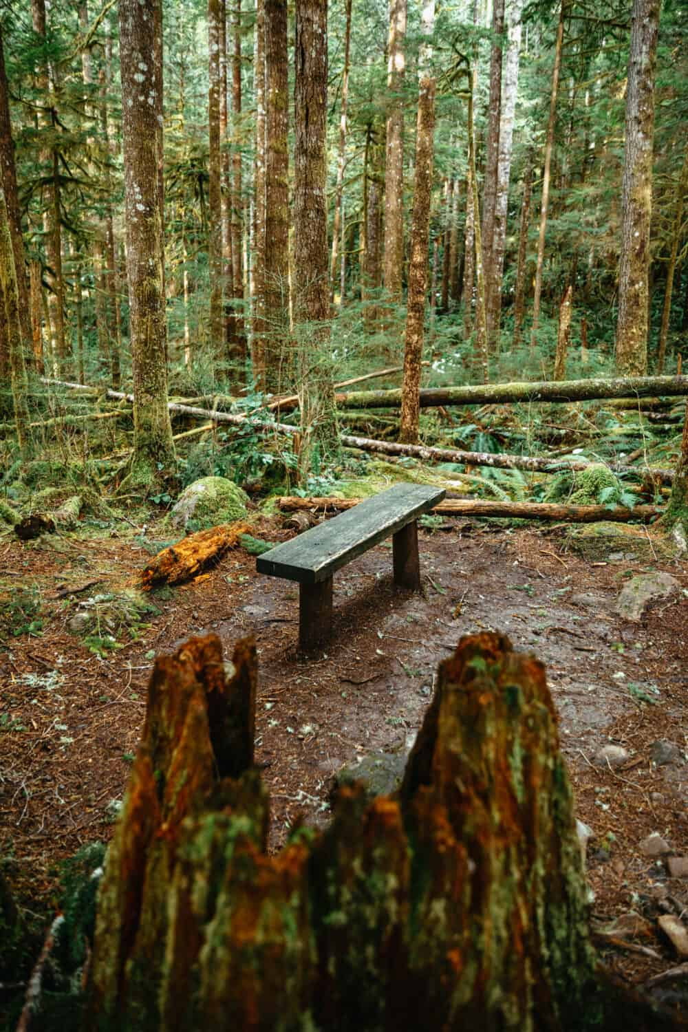 Bench along Wallace Falls Trail - TheMandagies.com
