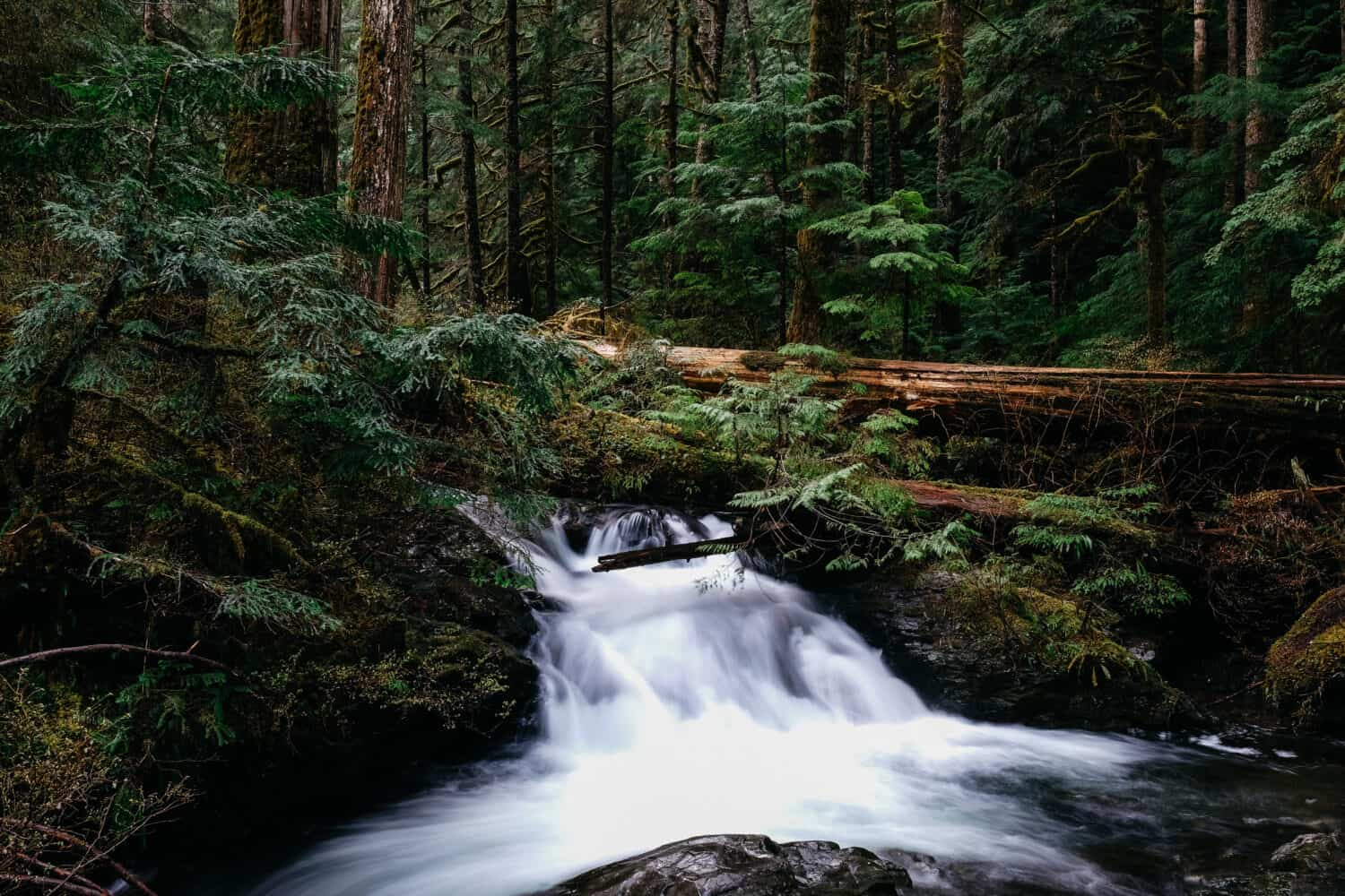 Lake 22 Trail - Hikes From Seattle, Washington - TheMandagies.com