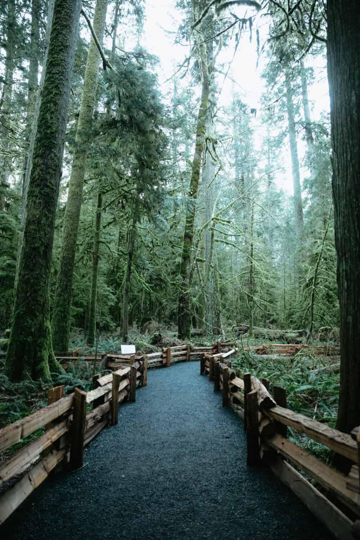 Cathedral Grove, Vancouver Island, British Columbia - TheMandagies.com