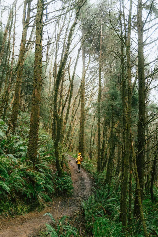 The Best Oregon Coast Hikes