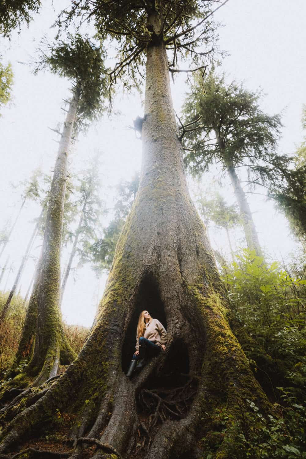 Cathedral Tree Trail - Best Oregon Coast Hikes