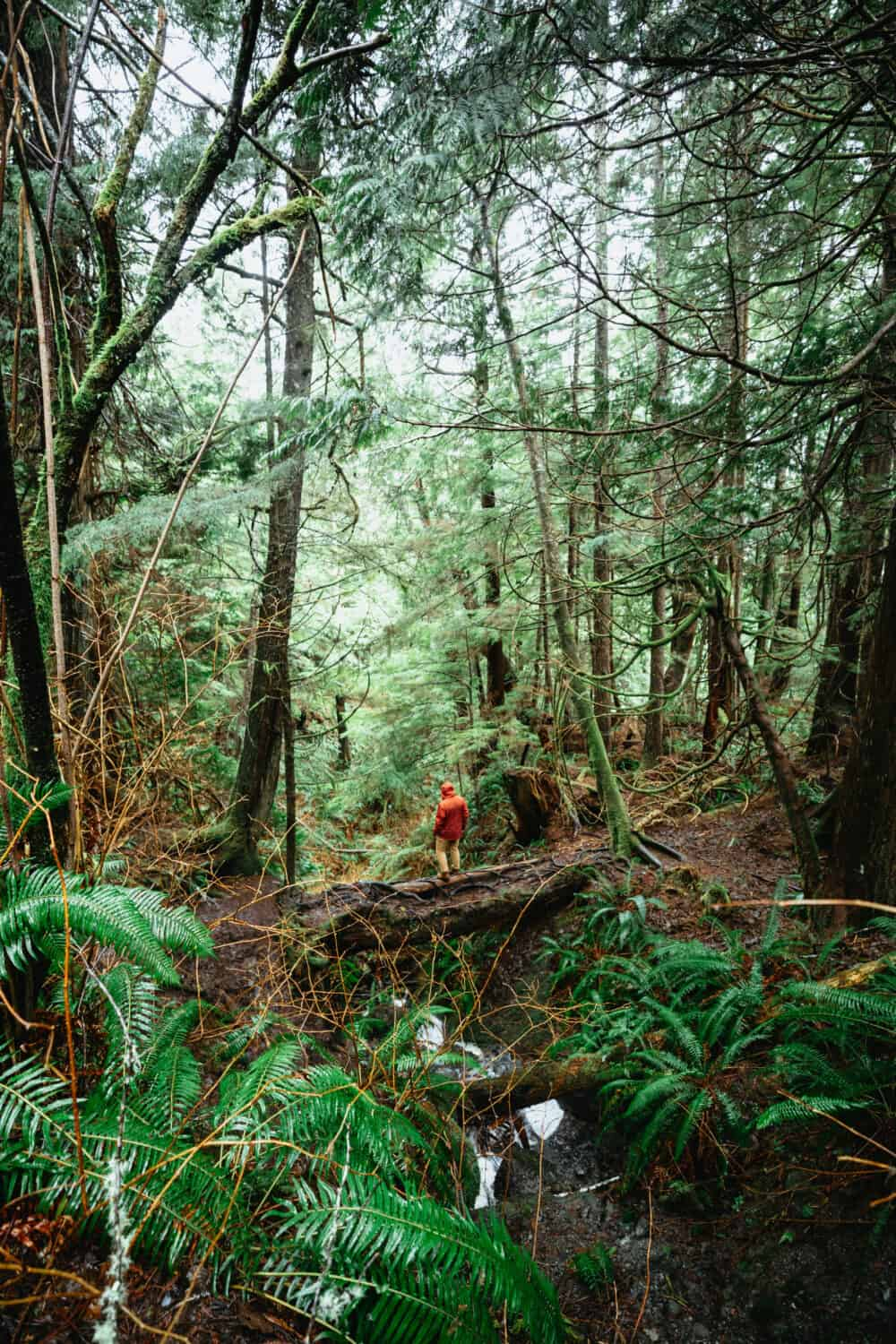 Temperate Rainforest in Olympic National Park - TheMandagies.com