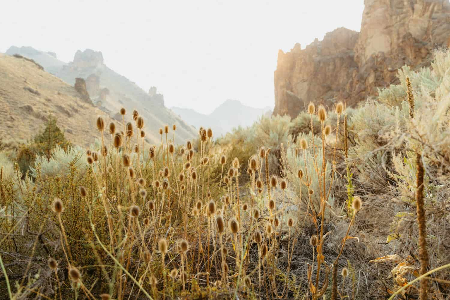 Flora and Fauna in Eastern Oregon - Owyhee Canyonlands