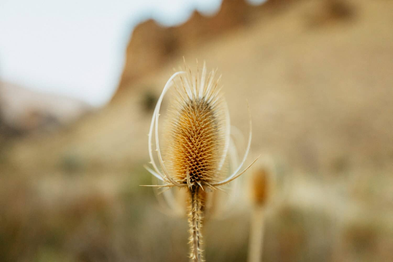 Flora and Fauna in Owyhee Canyonlands - Eastern Oregon
