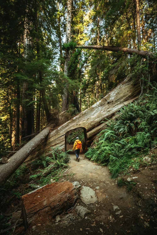 Berty Mandagie walking in the Redwoods in Northern California