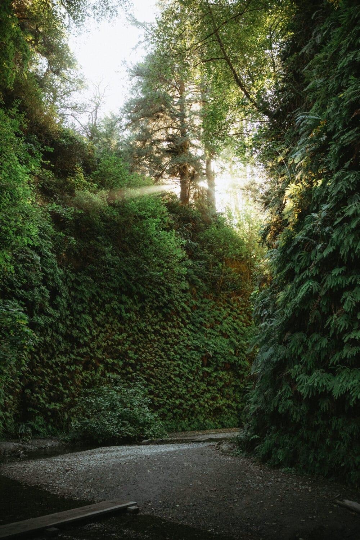 Fern Canyon Loop Trail Fern Walls