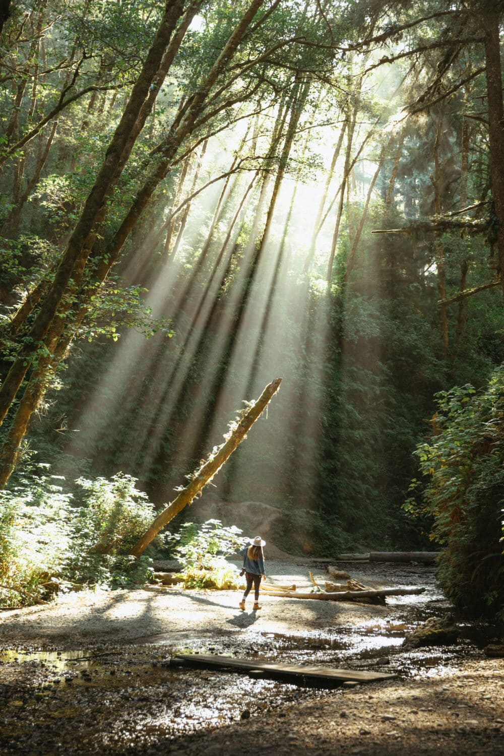 Emily Mandagie walking on Fern Canyon Trail in California -Light Rays