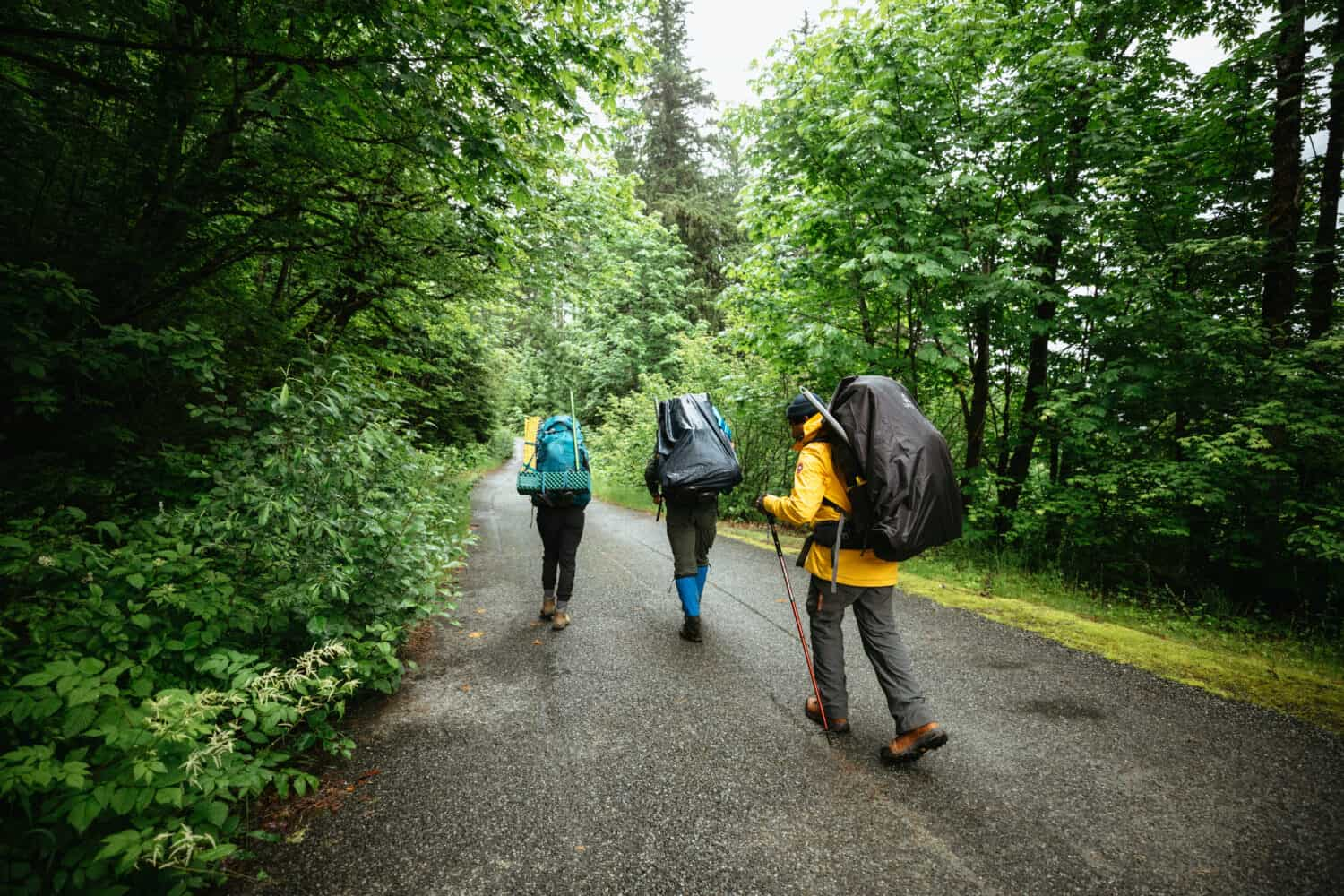 Hiking on the Cascade River Road to the trailhead.