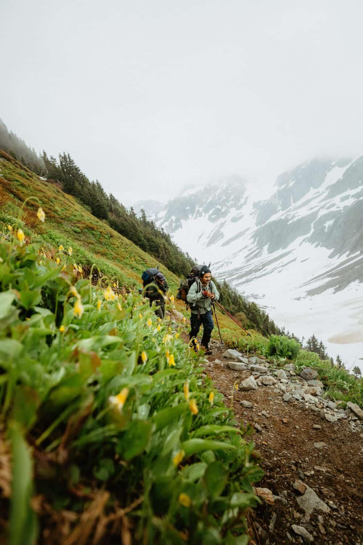 Glacier Lilies hiking Sahale Arm Trail