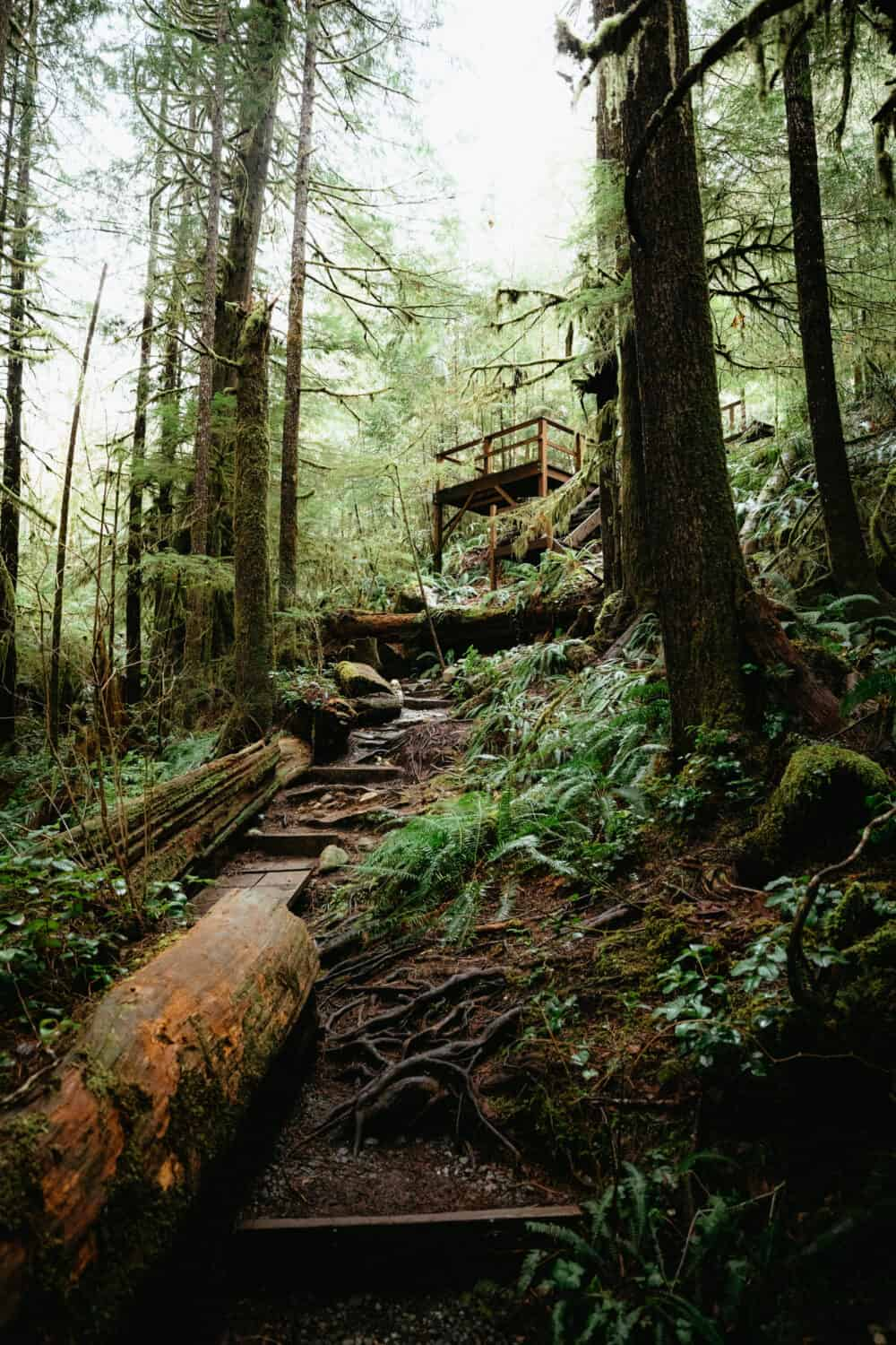 Forest Bathing in Avatar Grove, Vancouver Island