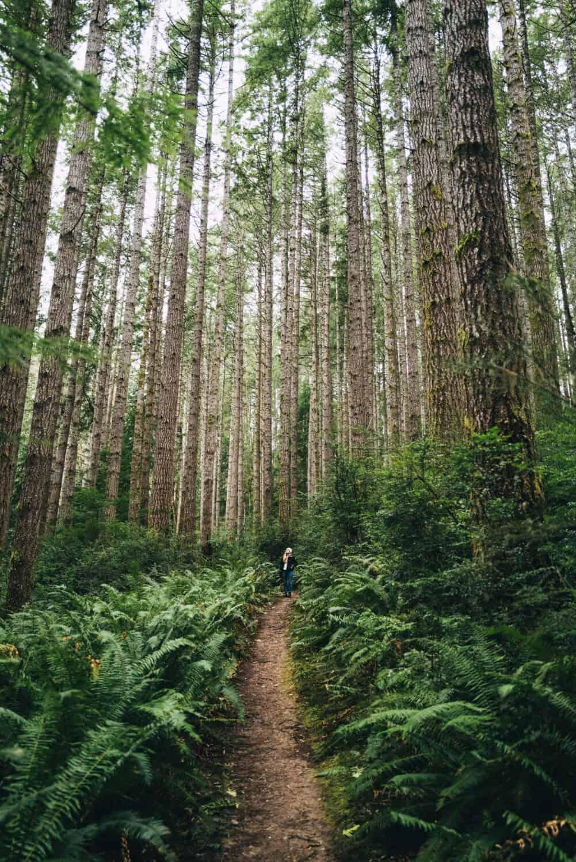 Emily Mandagie forest bathing in the Puget Sound, Washington