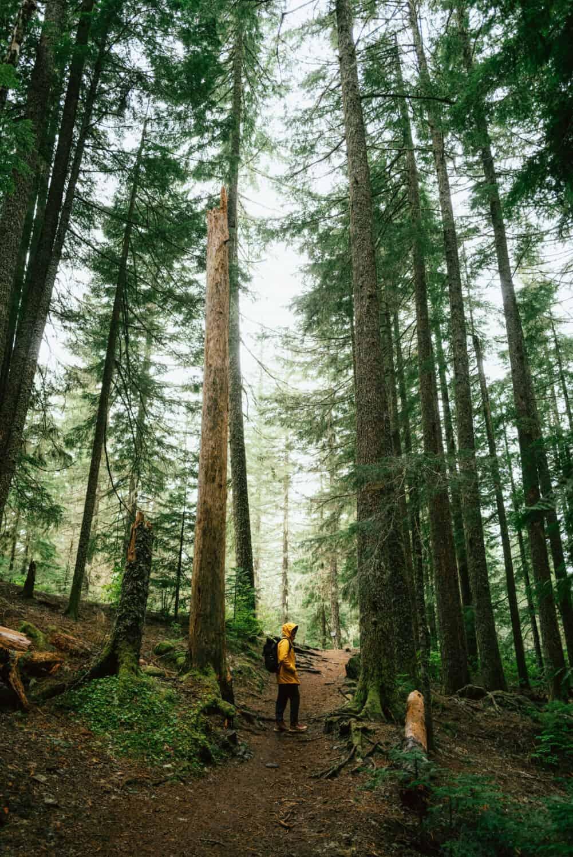 Berty Mandagie taking some Mount Hood hiking trails