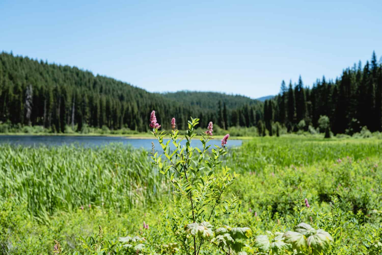 Lake Ann on the Marion Lake Trail Oregon