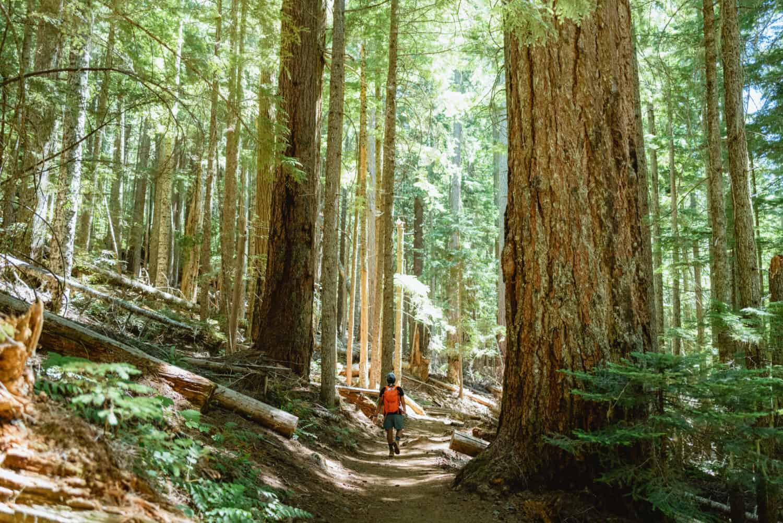 Berty Mandagie walking on Marion Falls hike in Oregon