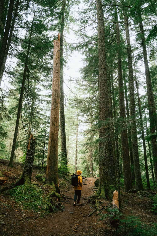 Berty Mandagie hiking on Ramona Falls Trail in Oregon